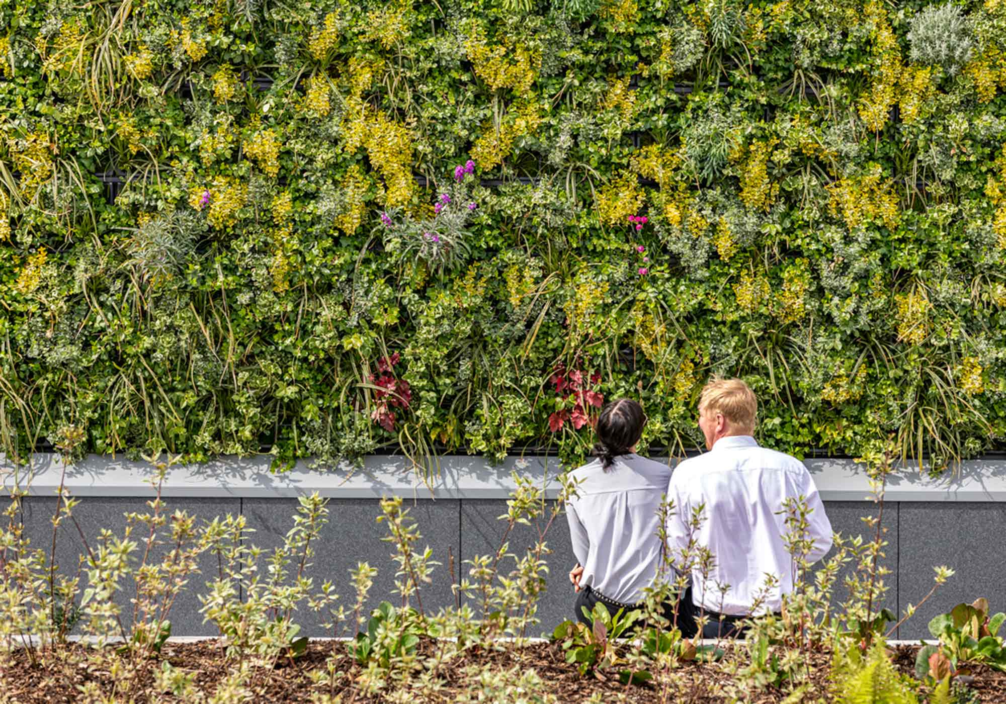 Living Garden Wall at McLaren Development